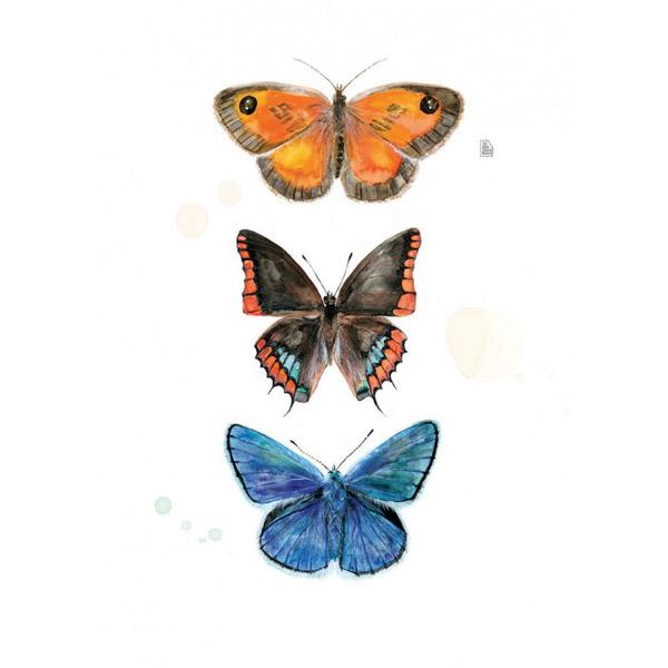 Lámina tres Mariposas