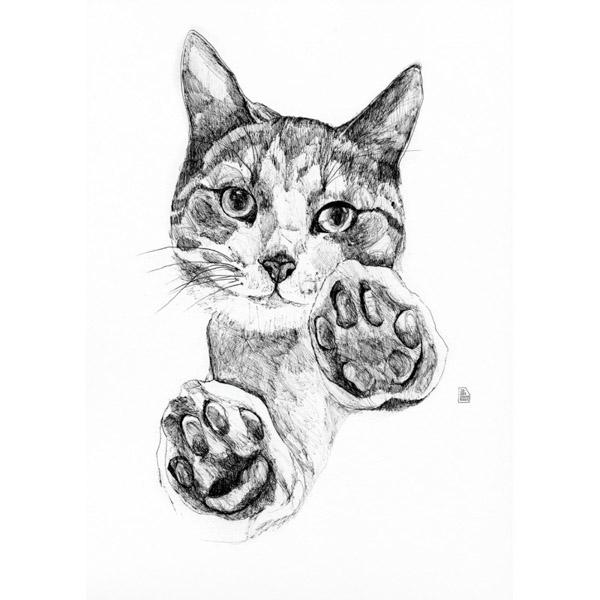 lámina gato patas