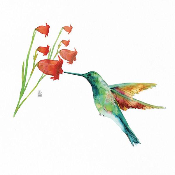 Lámina hummingbird-love-flor-campanas