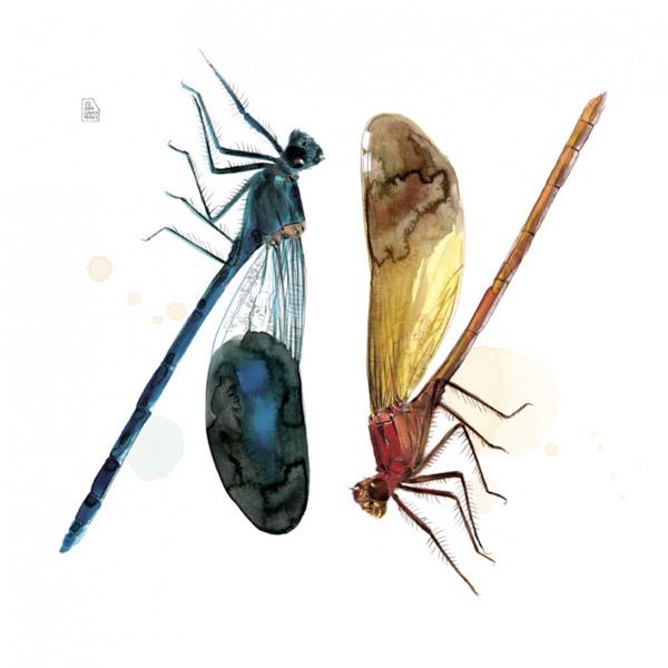 lámina libélula