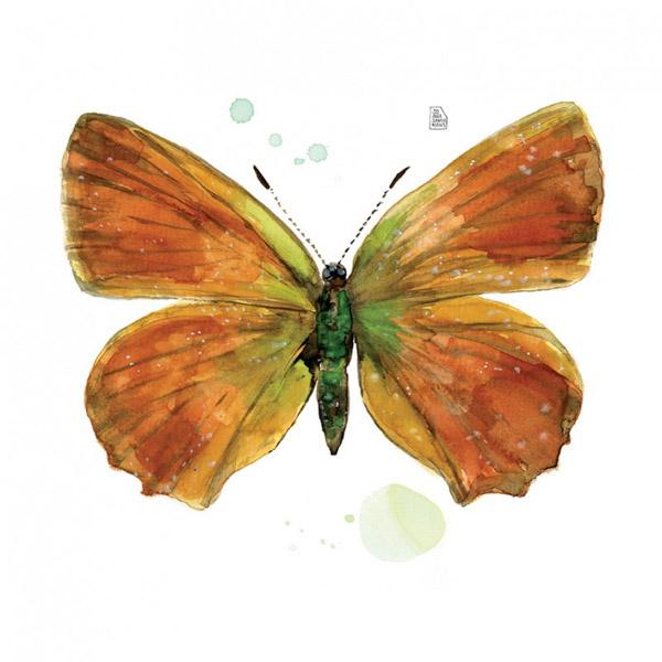 lámina mariposa